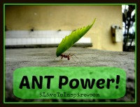 The power ant